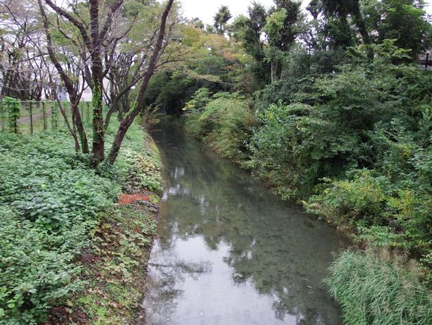 14_玉川上水HA_2016.10.19.jpg