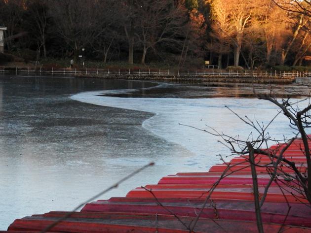 01_ボート池の結氷ZA_2018.01.07.jpg